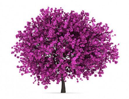 Kanadischer Judasbaum Cercis Chinensis Avondale Der Kanadische Judasbaum Besitzt Wunderschone Herzformige Blatter Judasbaum Garten Bepflanzen Rosa Garten