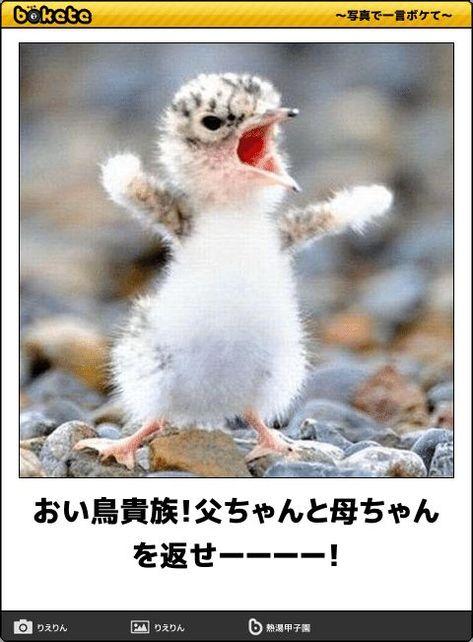 おい鳥貴族!父ちゃんと母ちゃんを返せーーーー! - 動物...