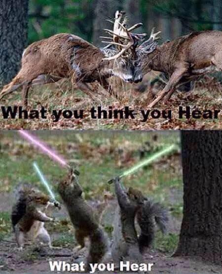 So true! One time a big fox squirrel dashed between some trees on a ridge and man after a long morning sit I was sure it was the back of a deer! Funny Hunting Pics, Deer Hunting Humor, Hunting Jokes, Whitetail Deer Hunting, Funny Deer, Quail Hunting, Deer Hunting Tips, Hunting Girls, Turkey Hunting