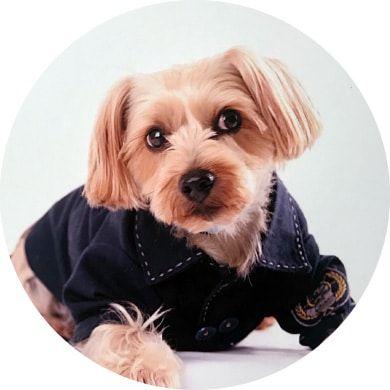 犬とお出かけ情報 宿 カフェ おしゃれまとめの人気アイデア Pinterest ゆき 九兵衛 犬 お出かけ