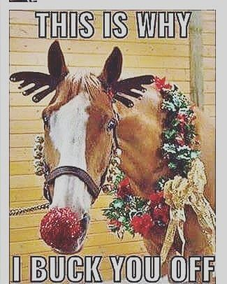 Nearly Time Horse Kids Quote Quoteoftheday Quotes Quotetags Quotestoliveby Instaquotes Instagr Lustige Pferdespruche Niedliche Pferde Susseste Haustiere