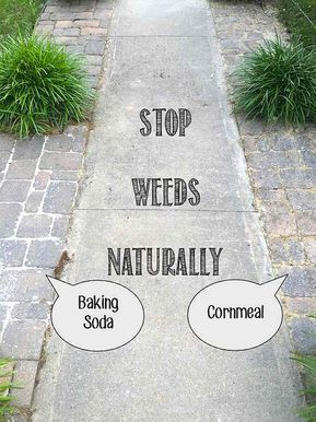 pesky weeds naturally and for good in walkways and rocky borders with Baking Soda or Cornmeal.Stop pesky weeds naturally and for good in walkways and rocky borders with Baking Soda or Cornmeal. Garden Weeds, Lawn And Garden, Garden Art, Terrace Garden, Weeds In Lawn, Garden Paths, Organic Gardening, Gardening Tips, Gardening Services