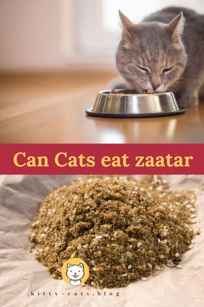 Can Cats Eat Zaatar Have You Ever Answered The Question Cat Nutrition Best Cat Food Cat Diet