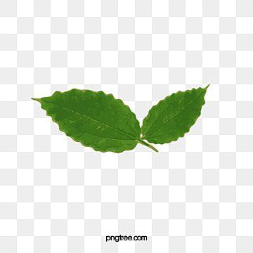 ورق الشجر يترك شريحة واحدة خطوط واضحة Png والمتجهات للتحميل مجانا In 2021 Plant Leaves Lemon Painting Leaves