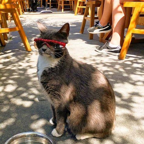 polarizedsunglasses Major Caturday Catitude 💫 🍩...