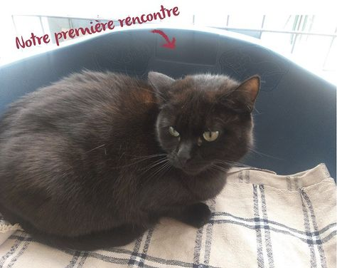 Adopter Un Chat A La Spa Chat Spa Et Animaux Sauvages