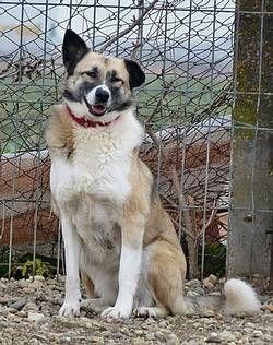 Tiere In Not Seite Hunde Aus Rumanien Hunde Aus Rumanien Tiere In Not Hunde