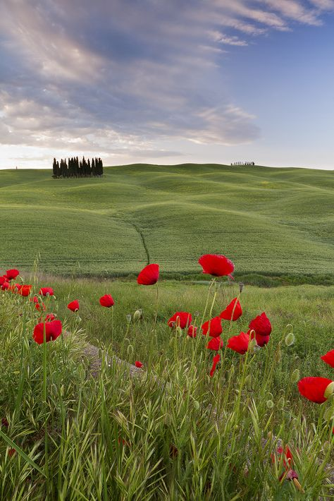 Poppies, Tuscany, Italy thank you Jesus for such a beautiful place you created
