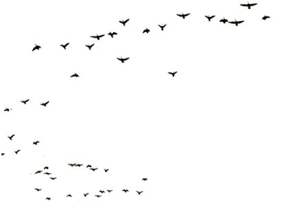 Гифка птицы летят на прозрачном фоне, гиф