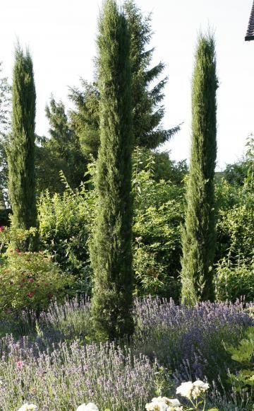 Tauschend Echt Die Doppelganger Mediterraner Pflanzen Mediterrane Pflanzen Mediteraner Garten Mediterraner Garten