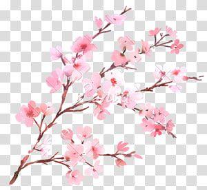 35++ Cherry blossom flower clipart information
