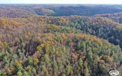 75 Acres Hazel Green Ky Property Id 10109121 Land And Farm In 2020 Hazel Green Forest Plants Undeveloped Land