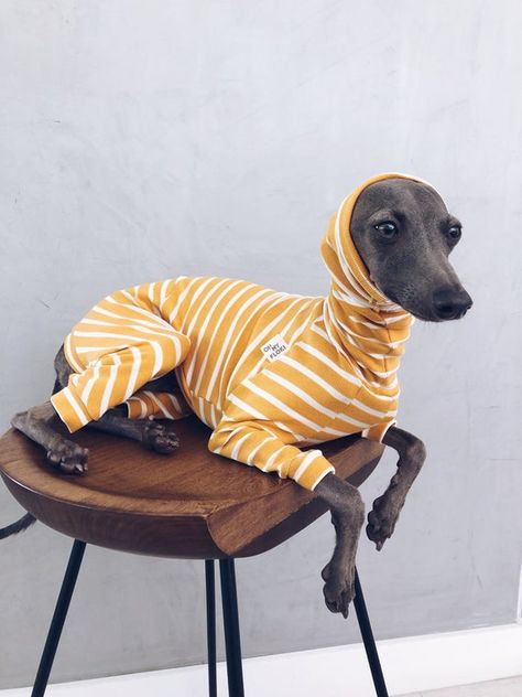 Italian Greyhound Dog, Greyhound Art, Miniature Italian Greyhound, Whippet Dog, Dog Clothes Patterns, Grey Hound Dog, Animal Design, Cute Dogs, Cute Animals