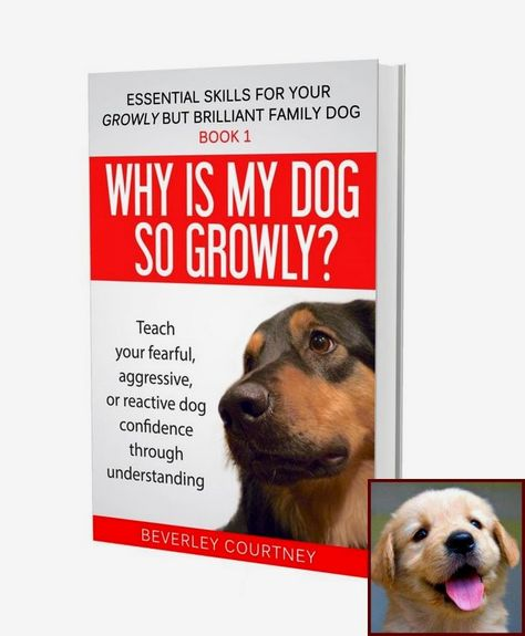 House Training A Young Puppy And Clicker Training Dogs Without