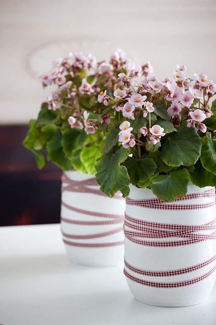 Begonia Rosliny Doniczkowe Modne Zima Seasonal Flowers Flower Pots Flower Centerpieces