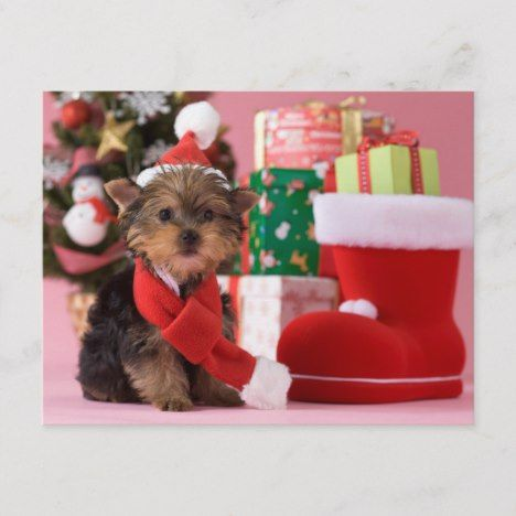 Mommy Yorkshireterrier Christmas Merrychristmas Xmas Yorkshire Terrier Lovely Funny Happiness Dog Christ In 2020 Yorkshire Terrier Christmas Movies Terrier