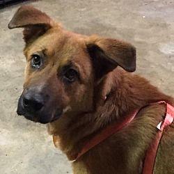 Pin By Lea Nichols On Helping Precious Animals Pets Pet