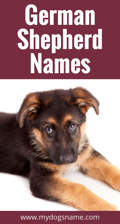 German Shepherd Names The Ultimate List 175 Awesome Names