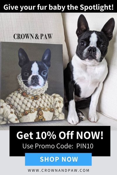 Give Your Beloved Pet Pride Of Place With A Completely One Of A Kind Pet Portrait Pet Products Dog House Pet Orag In 2020 Pet Diy Dog Pet Care Dogs Pet Dogs Puppies