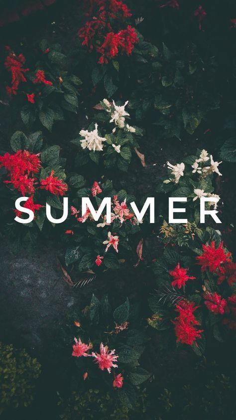 Summer Wallpaper Iphone Android Background Followme