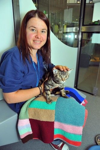 How To Knit A Cat Blanket For Battersea Dogs And Cats Home Cat Blanket Battersea Dogs Knitting For Charity