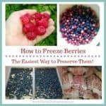 Are you anticipating a large berry harvest this year? Worried you won't have time to can them, or already have so much jam you don't know what to do? Freeze them! In this article I share my tips and tricks for the easiest method to preserve them. ~The Reid Homestead #berryseason #preservingberries #berryharvest #freezingberries #strawberries #raspberries #blueberries