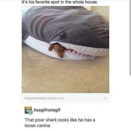 Memes That Make You Lol Irl Pt 3 Page 1 Stupid Memes Cute Jokes Memes