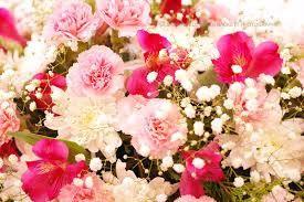 Carnation Premium Fragrance Oil 4 Oz 2 Oz 1 Oz Or 1 2 Oz Bottle Fragrance Oil Carnations Fragrance
