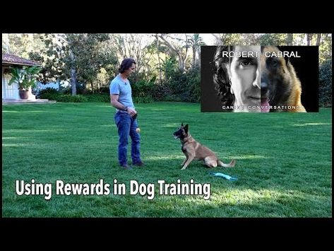 The Game Of Tug Robert Cabral Dog Training 11 Youtube Dog