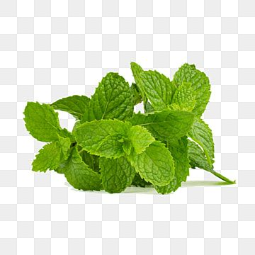 Green Fresh Freshness Herbs Mint Ingredient Aroma Leaves Clipart Mint Leaves In 2021 Leaf Clipart Fresh Mint Leaves Watercolor Flower Background