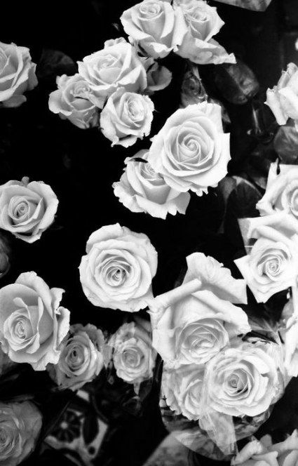Wallpaper Black Pink Flower 27 Ideas White Roses Wallpaper Floral Wallpaper Desktop Wallpaper Backgrounds