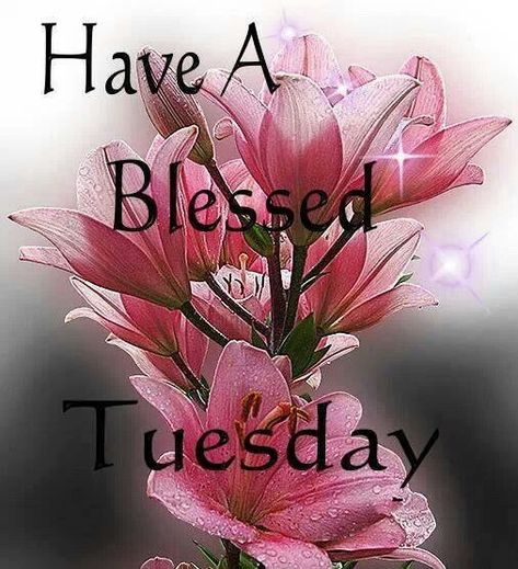Have A Blessed Tuesday Flowers good morning tuesday tuesday quotes good morning…