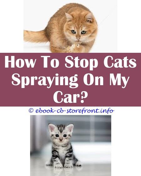 10 Inexpensive Stop Cats Spraying Outside House Admirable
