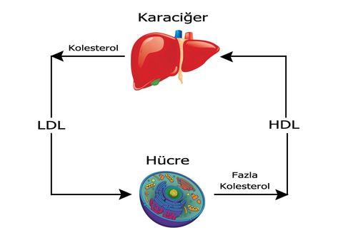 hdl kolesterol mat
