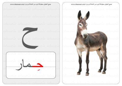 حرف كلمة صورة بطاقات الحروف والحيوانات 6 Animals Kangaroo