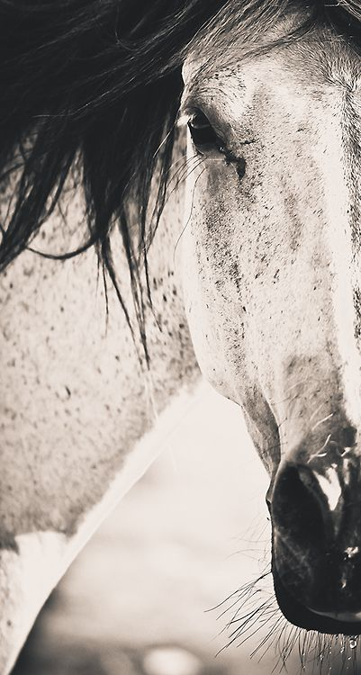 I love horses and really hope I can start riding against this summer
