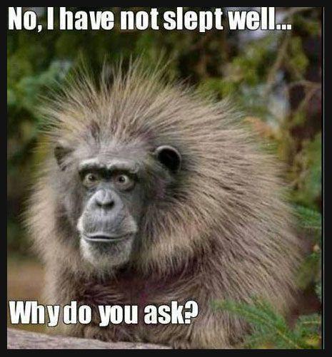 Znalezione obrazy dla zapytania sleep funny