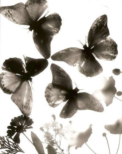 photograms - Reverse Photogram 1 by sofia__maria Dark Room Photography, Experimental Photography, Photoshop, White Aesthetic, Natural Forms, Photography Projects, Beautiful Butterflies, Light And Shadow, Wall Collage