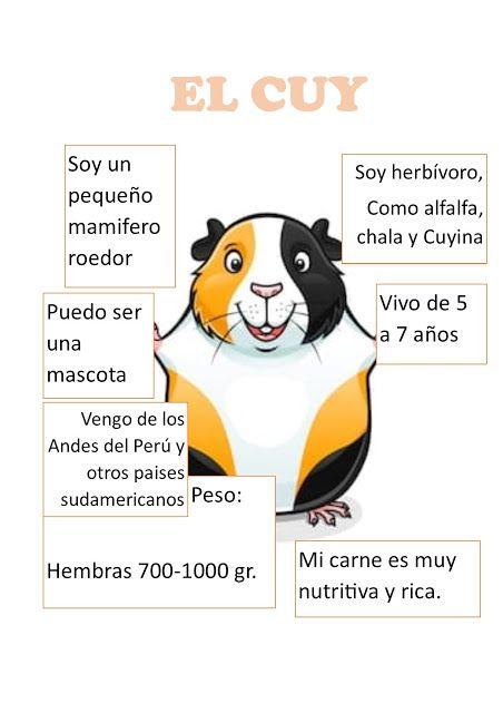 El Cuy Con Imagenes Cuyes Mascotas Animales