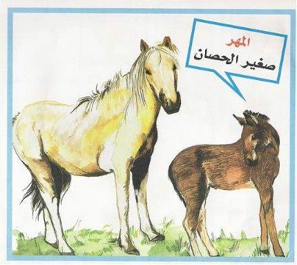 نتيجة بحث الصور عن حيوانات مع صغارها كرتون Animals Horses