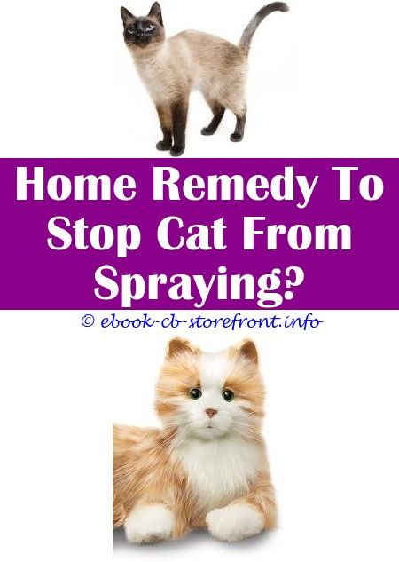 keep feline  gear spray