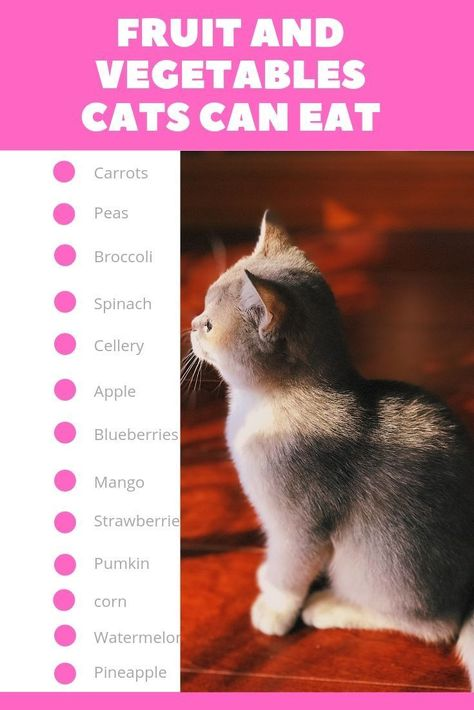 cat food #cats #cat #kittens #catfood - Human #Food for Cats: What Can Cats Eat check out this list to know more. For great cat feeding tips visit meowingcatz.com.