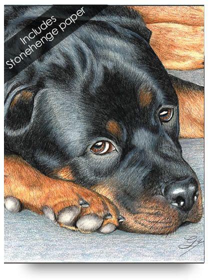 Rottweiler Tegninger Pinterest