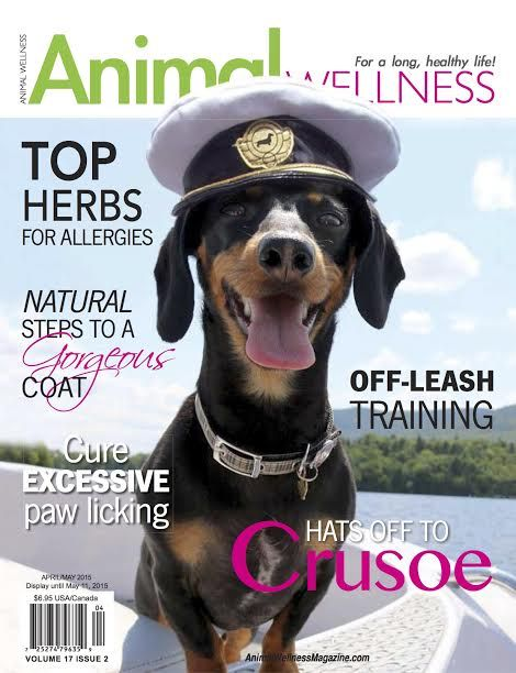 Crusoe on the next cover of Animal Wellness Magazine! Order the next issue to read Crusoe's interview and use code CRUSOE so 40% of your sale gets donated to Crusoe's local dachshund rescue! https://www.animalwellnessmagazine.com/subscribe-natural-health-package-deal/