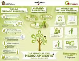 Infografia Del Medio Ambiente Buscar Con Google Place Card Holders Place Cards Cards