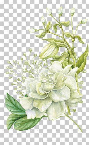 Acuarela Diseno Floral Flor Pintado A Mano Acuarela Rosa Blanca Flor Pintura Png Clipart Floral Painting Free Watercolor Flowers Flower Illustration