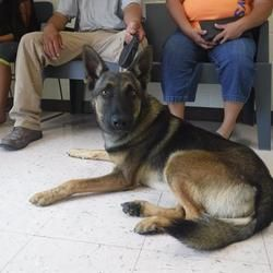 Pin By Lisa A On Adoptable Dogs German Shepherd Dogs Shepherd