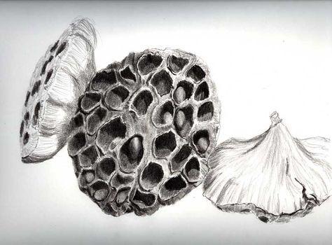 lotus pod. Filler
