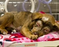 Justice For 8 Week Old Lab Named Bridgett Fed Bleach Petition