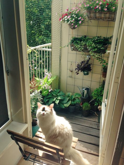 Amusing & Safe Balcony Decoration Ideas For Cats - Unique Balcony & Garden Decoration and Easy DIY Ideas My New Room, My Room, Animals And Pets, Cute Animals, Photo Chat, Dream Apartment, Cozy Apartment Decor, Aesthetic Rooms, Got7 Aesthetic